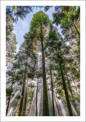 Tree Beams