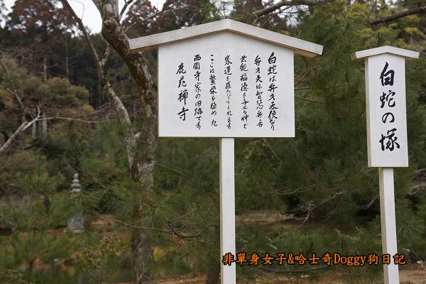 日本京都金閣寺19