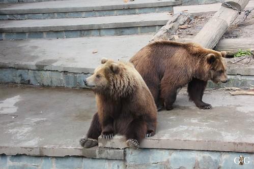 Zoo Rostock 11.04.2015132
