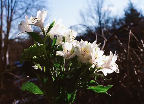 sunshine winter florals-outside