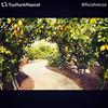 Repost from @TopRankRepost #TopRankRepost @florafirenze #esperienze #landart #tuscany #florence #colors #flowers