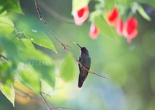 Hummingbird Paradise