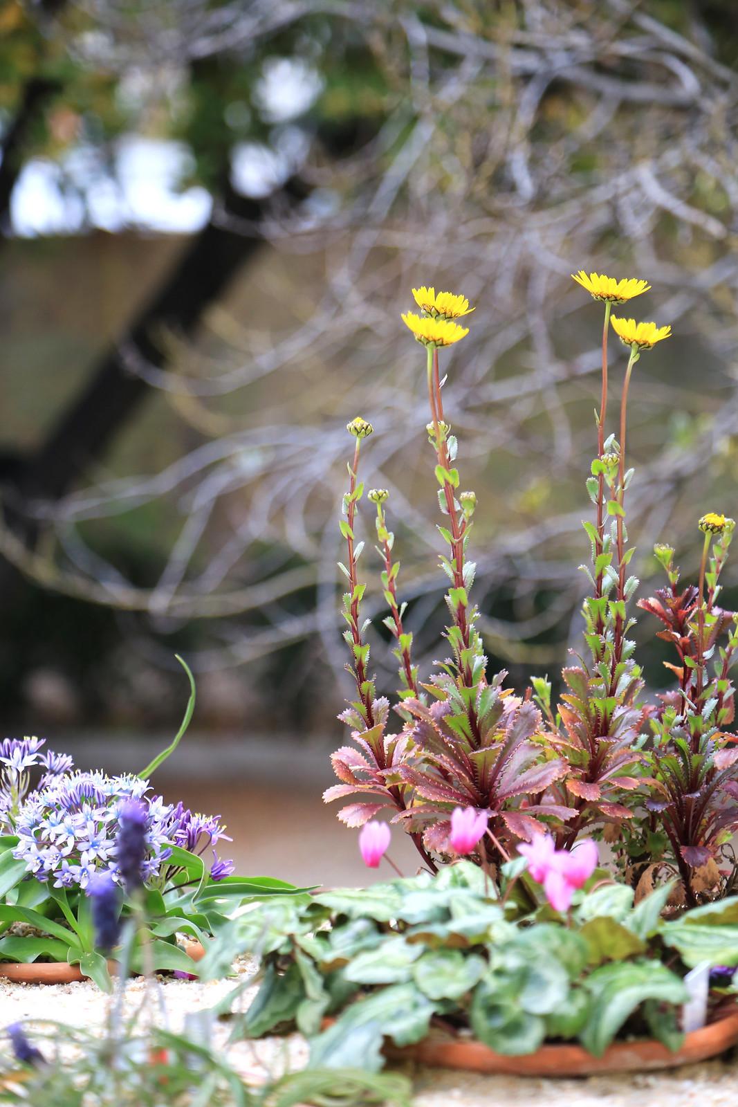 petites fleurs jardin botanique madrid