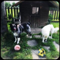 a ciascuno…la sua palla!