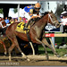 Lost Raven wins the Miss Preakness