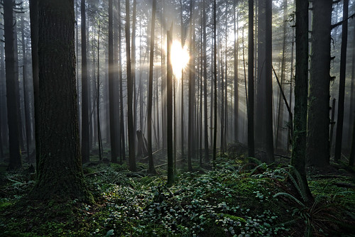 The Mists of Golden Ears. Fine Art Photography by Daniel Burdett