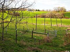 2015.04.26_The (expectant) hopyards at Stillpoint