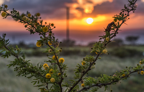 Balls of Yellow by Geoff Livingston