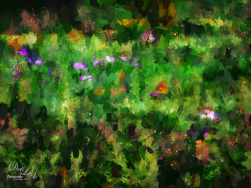 Image of a field of flowers and a butterfly