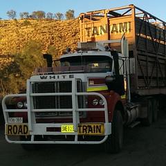 Road Train. Alice Springs, Northern Territory, Australia #roadtrain #truck #rig #primemover #trucking #transport #alicesprings #northernterritory #thealice #thealiceonline #photography #mediamanint #mediaman