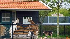 Serooskerke( walcheren)