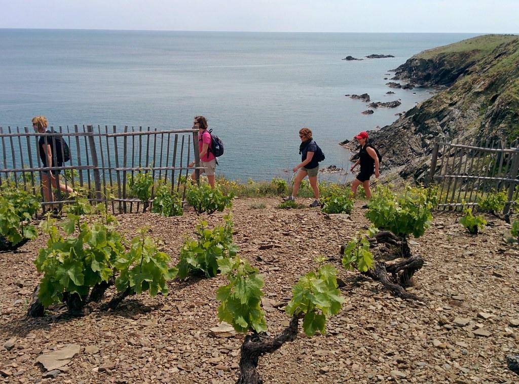 Vandring mellan hav och vin