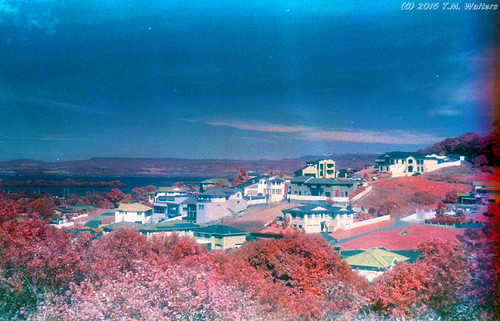 View of Berkeley (1986 expired Kodak Ektachrome Infrared 2236 35mm film)