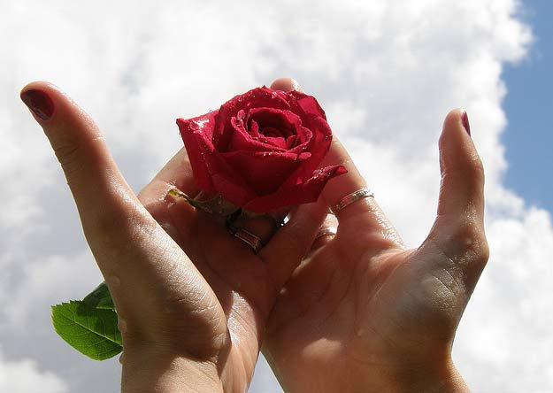 antonio gramsci la rosa di turi