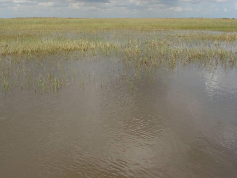 US Miami Everglades 0607 044
