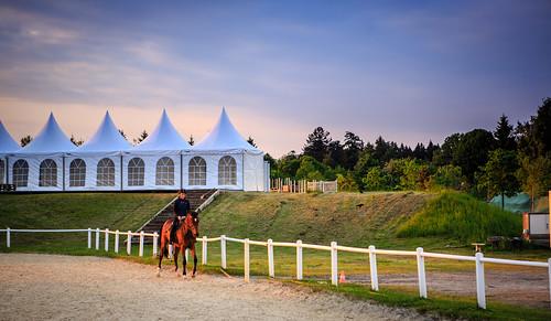 Horse Riding, Lausanne