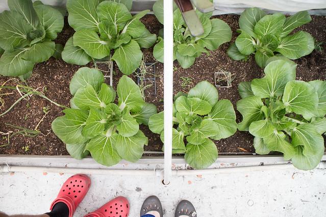 Garden May 15 2015_40