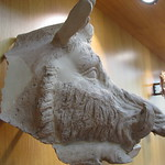 Italy - Campania - Salerno - Provincial Archaelogical Museum - Boar`s head