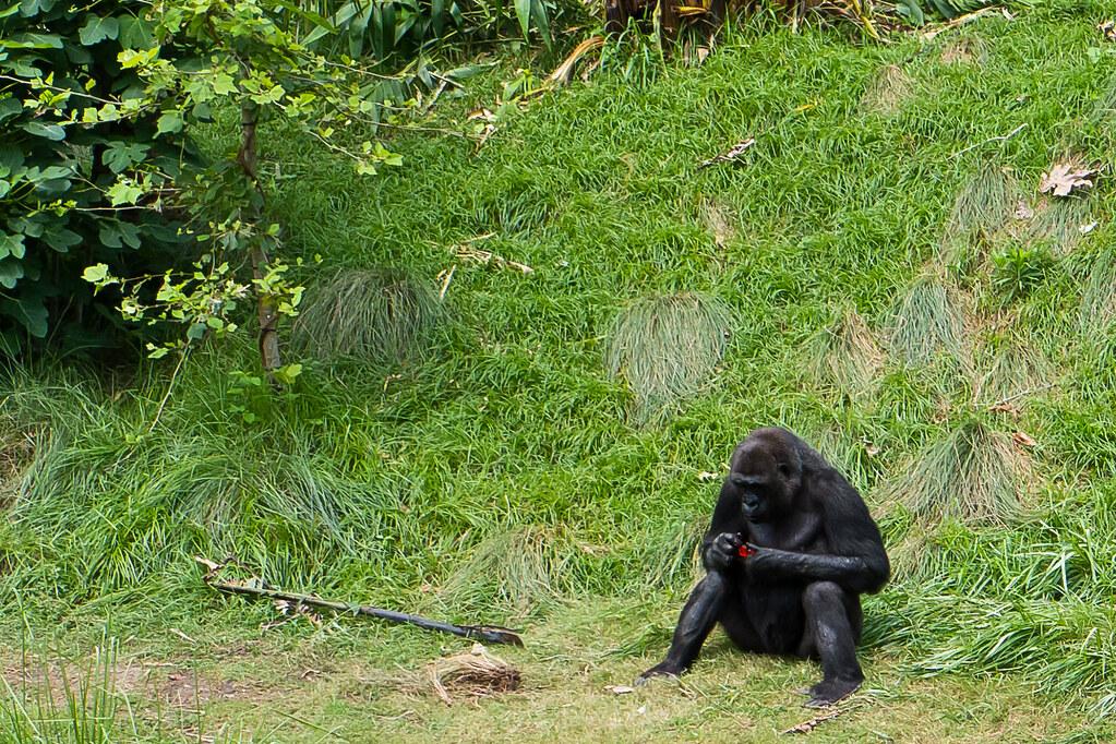 Judging Monkey