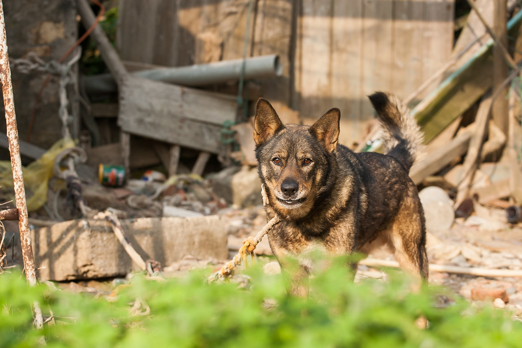 2015 0413 Dog of Dongju' Matsu 20