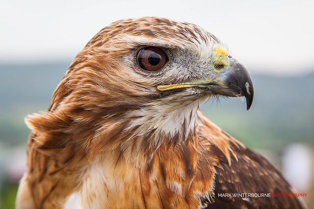 Bird of Prey [explored #179]