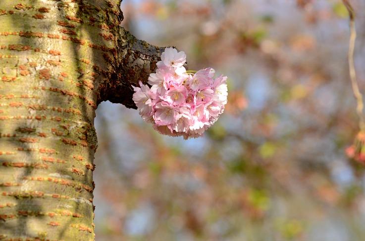 DSC_8090 Spring Flower
