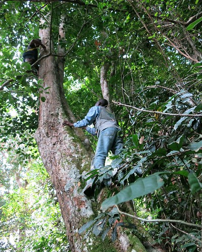 Prof Ewango climbs_takes two to measure