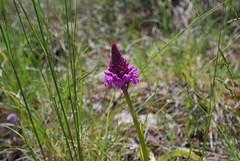 Orchid at the Vulture visitor centre 2