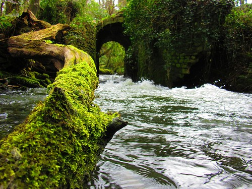 The Old Mill Brackenstown The Ward River Valley 05-04-2015 002