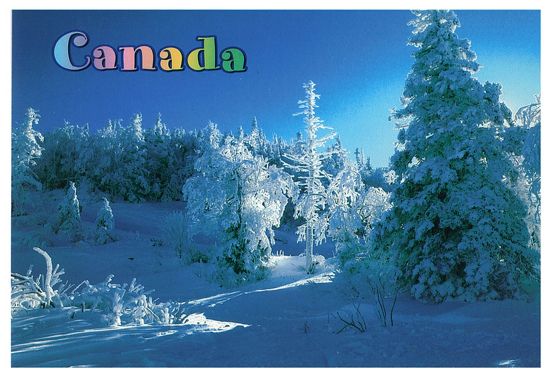 Canada - winter forest