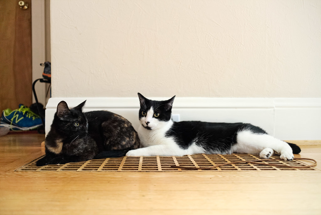 Our cats Trixie and Boo resting on the heating vent