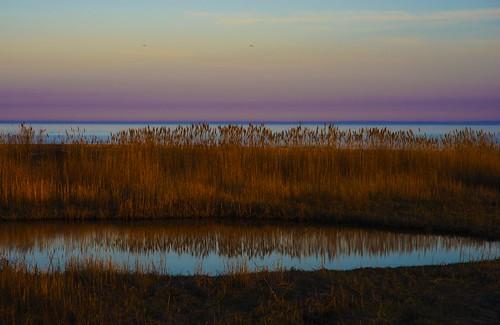 beach connecticut milford longislandsound sunset dusk beachgrass marsh wetland water landscape environment silversandsstatepark landscapes silversandspark park milfordct milfordbeach ct