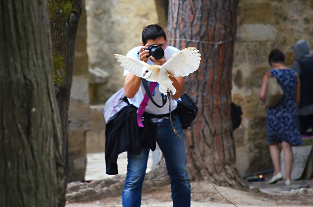 Birds of prey, Castello S Jorge, Lisbon, Portugal