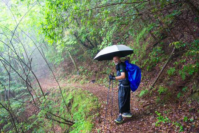 Misty trail marmot