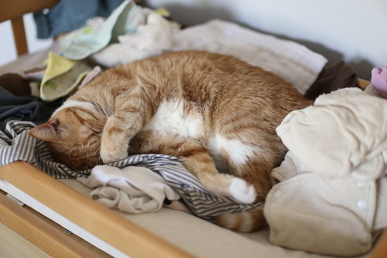 sleeping on (clean) laundry