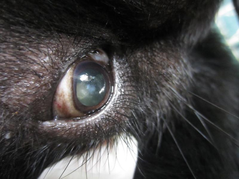 Bao Lam has cataract in her eyes