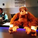 Vastaanotto sai uuden virkailijan 🐵 #casinohelsinki #helsinki #casino #kasinolla #orangi #apina #monkeybusiness