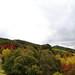 Small photo of Adelaide Hills Botanic Gardens