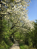 Frühjahrsblühen in Kremenholl