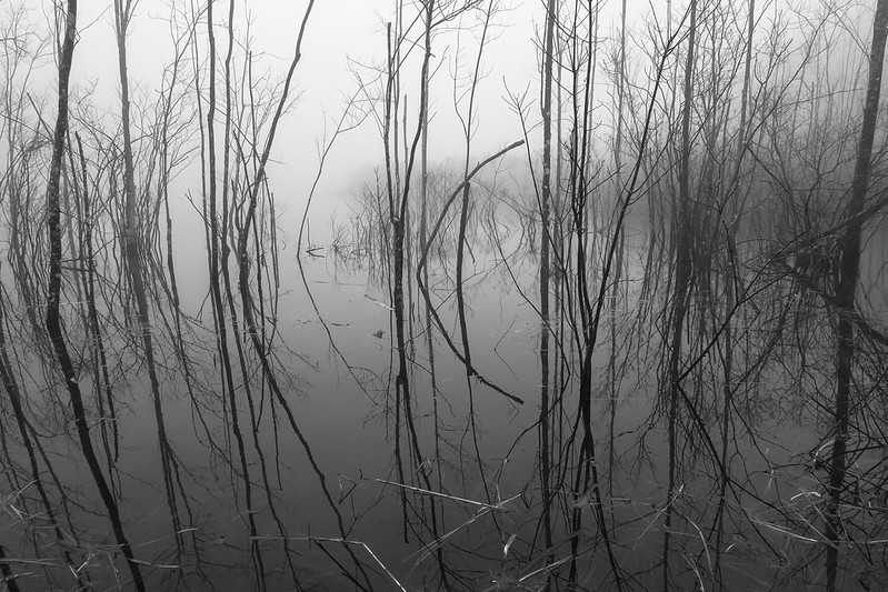 Swamp in fog