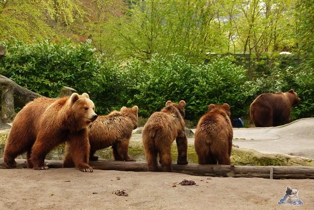 Tierpark Hagenbeck 25.04.2015   22