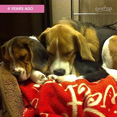 My heart... :heart:️ One of my favorite photos of baby Dylan and a teenaged Dax!#timehop