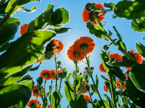 plant flower landscape scenery natural air jp 日本 花 自然 風景 植物 okayama kimura 岡山県 景色 岡山 takuma 琢磨 a01 木村 岡山市 photones