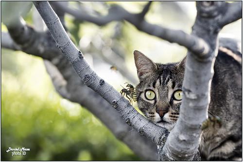 Amazed voyeur