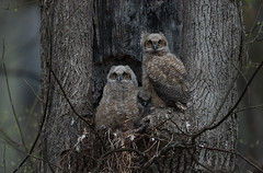 A cold, dark, wet morning owls by snooker2009