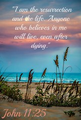 John 11:25 nlt