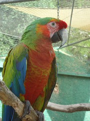 lorikeet(0.0), animal(1.0), lovebird(1.0), macaw(1.0), parrot(1.0), pet(1.0), fauna(1.0), beak(1.0), bird(1.0),