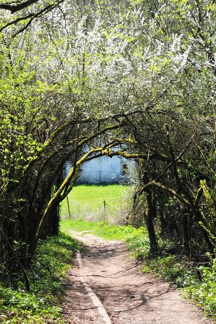 Mullerthal Trail 2: Berdorf - Consdorf