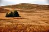 Quail Hill Preserve