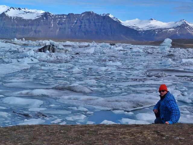 Sele en la Laguna Jökulsárlón (Islandia)